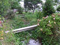 十湖池ビオトープ